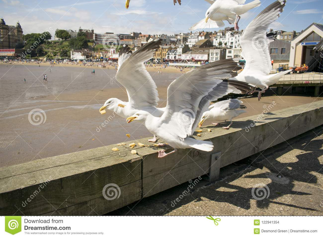 Gaviotas de Scarborough, North Yorkshire, Inglaterra, Reino Unido