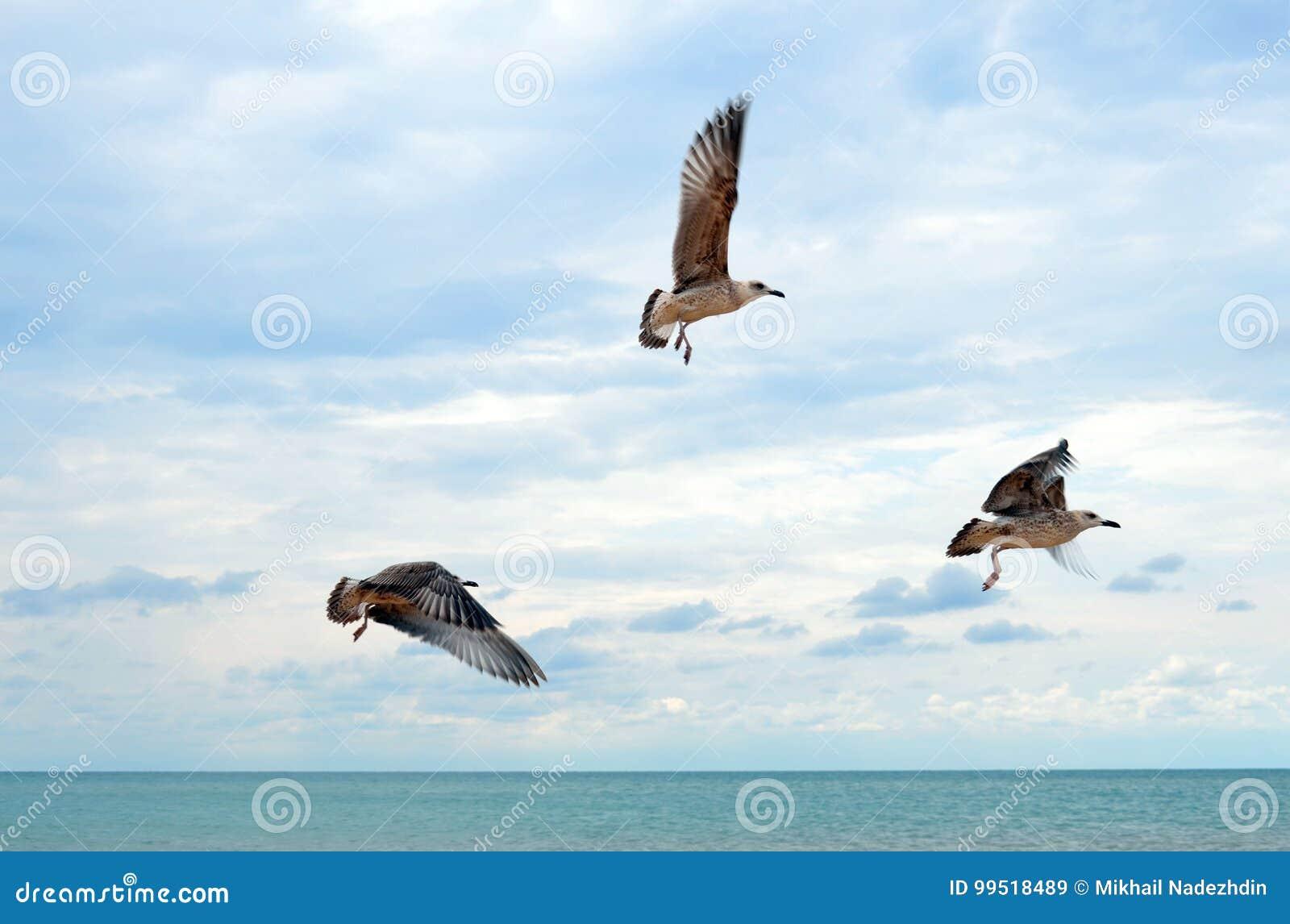 Gaviotas del vuelo sobre el mar tranquilo