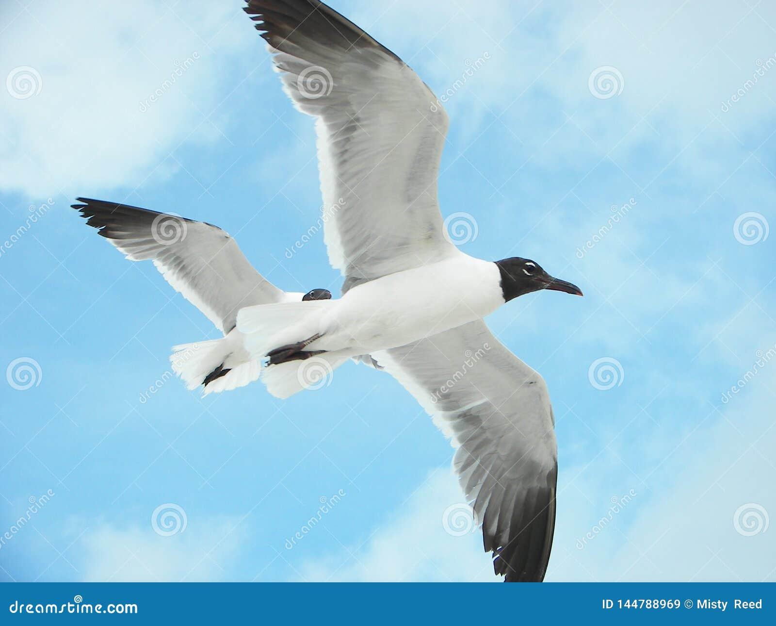 Gaviotas en vuelo en un día soleado