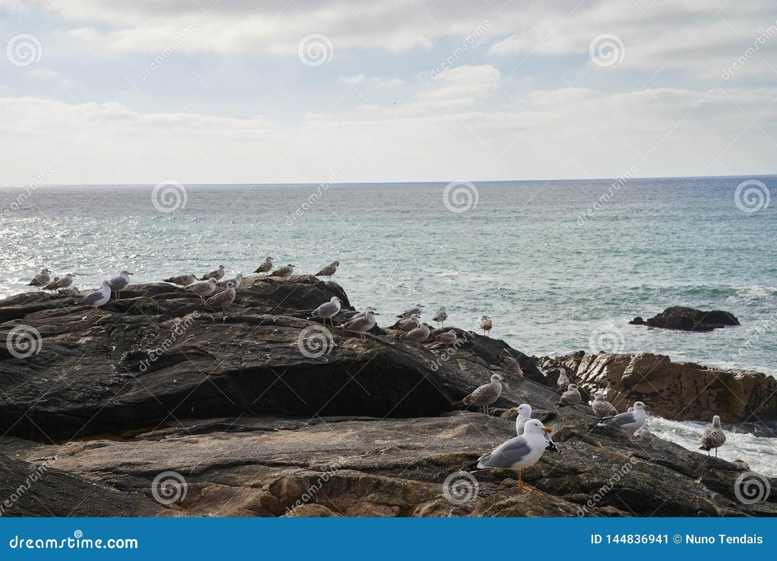 Gaviotas que se colocan en la roca que pasa por alto el océano