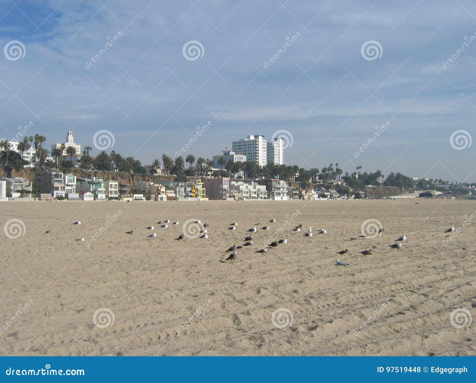 Gaviotas que se enfrían, Santa Monica Beach, California, los E.E.U.U.
