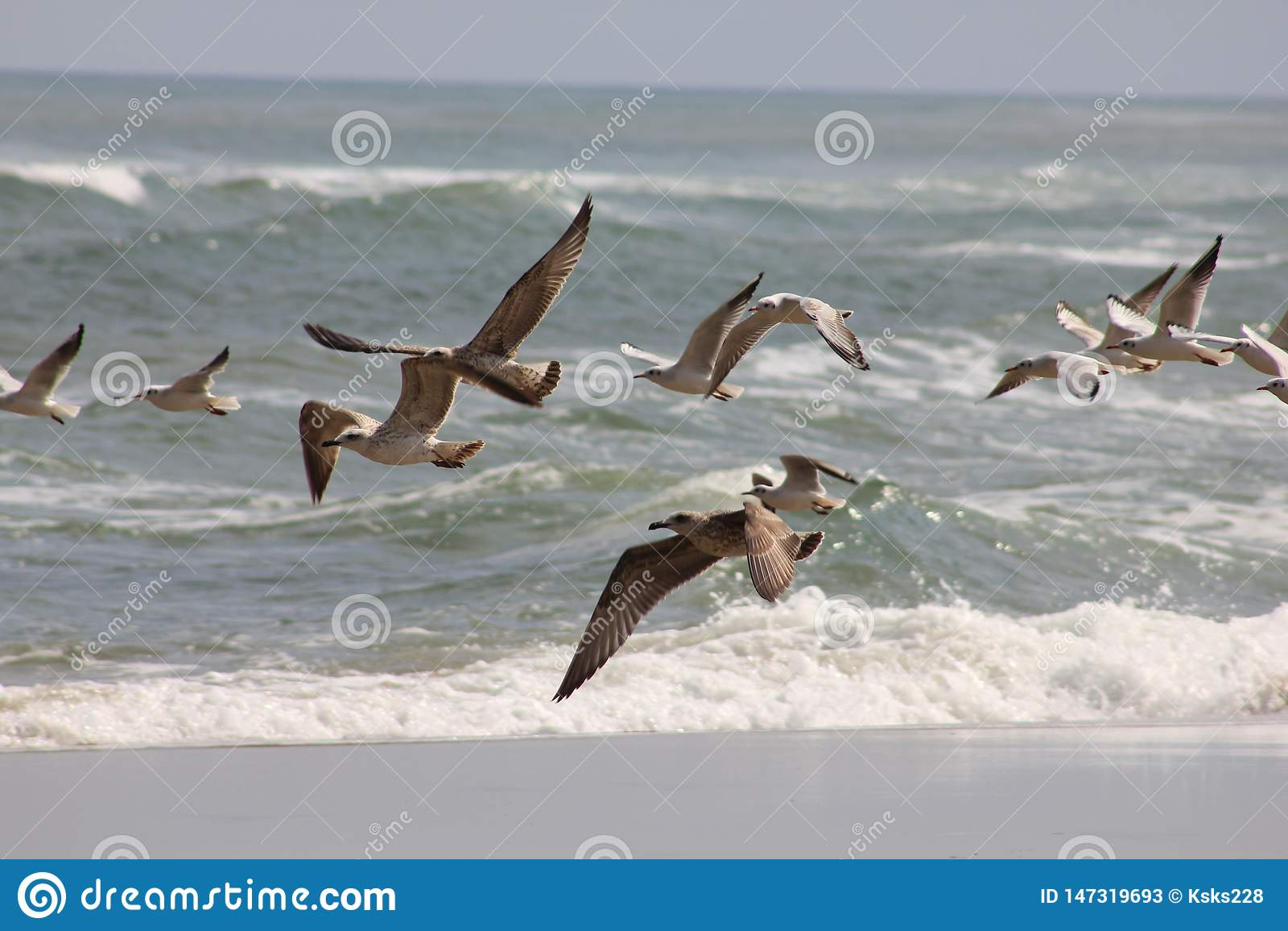 Gaviotas que vuelan contra la perspectiva del mar