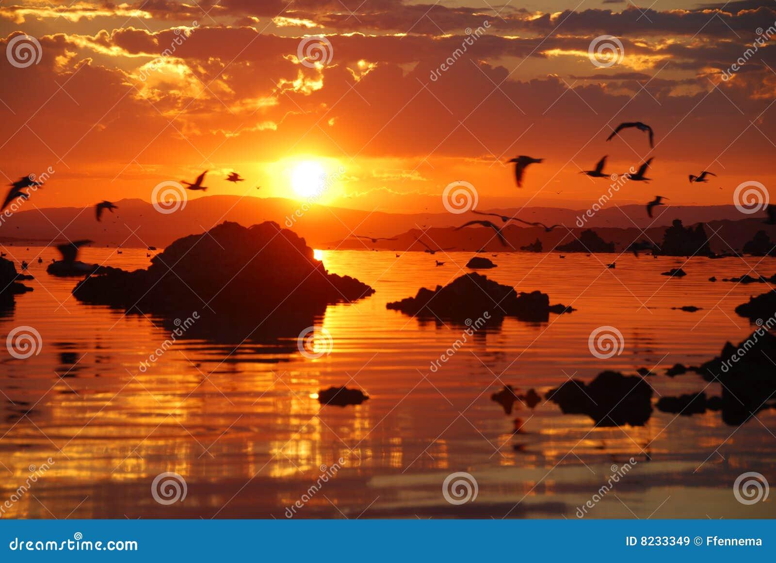 Gaviotas que vuelan sobre el mono lago durante salida del sol