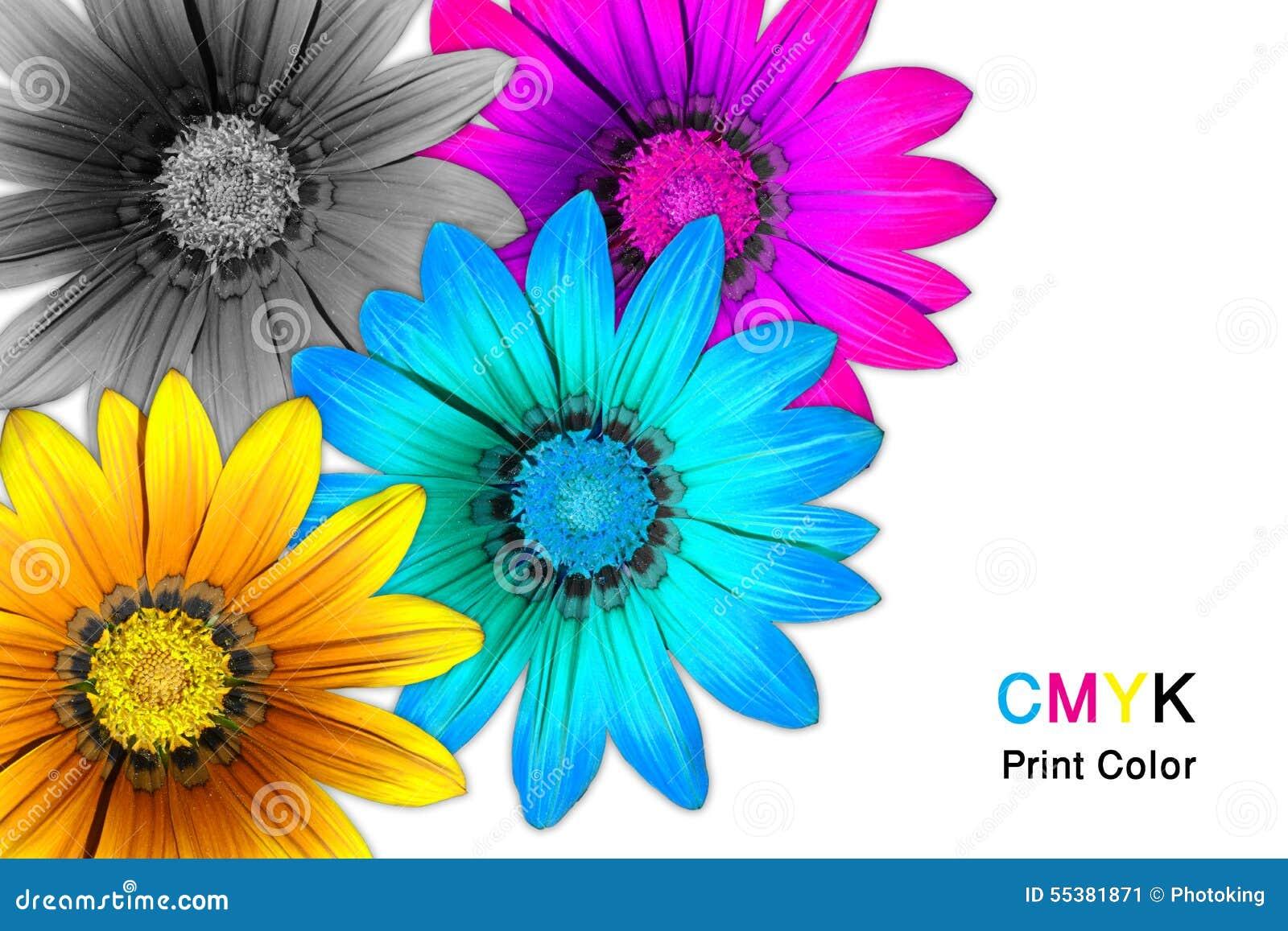 Gazania flowers CMYK
