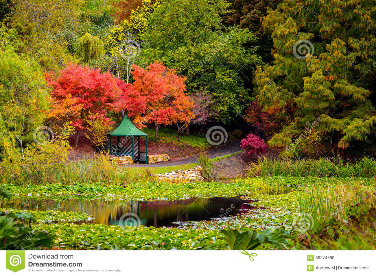 Pond in a park in autumn royalty free stock photo for Pond dealers