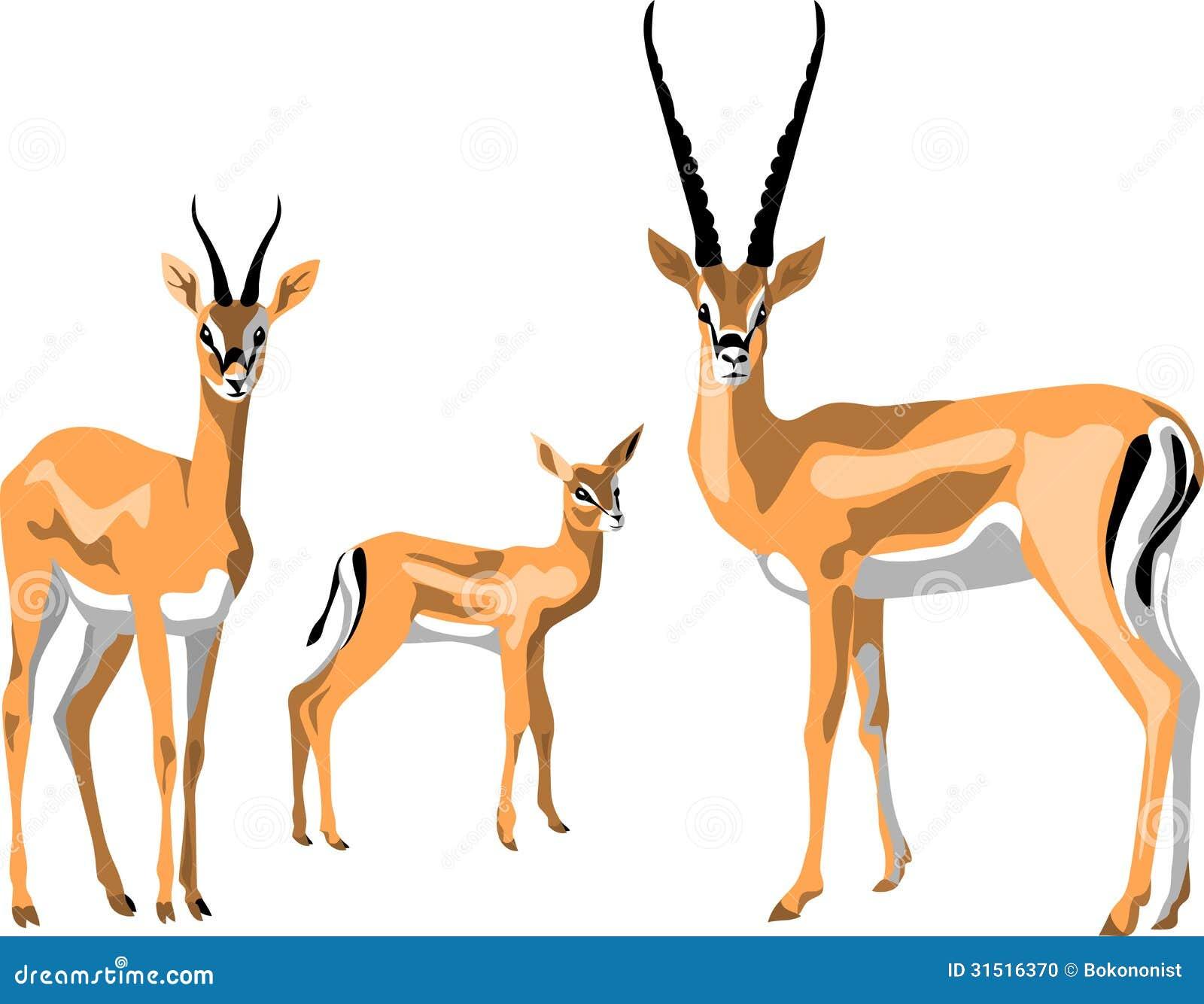 Grant gazelle family - color illustration.