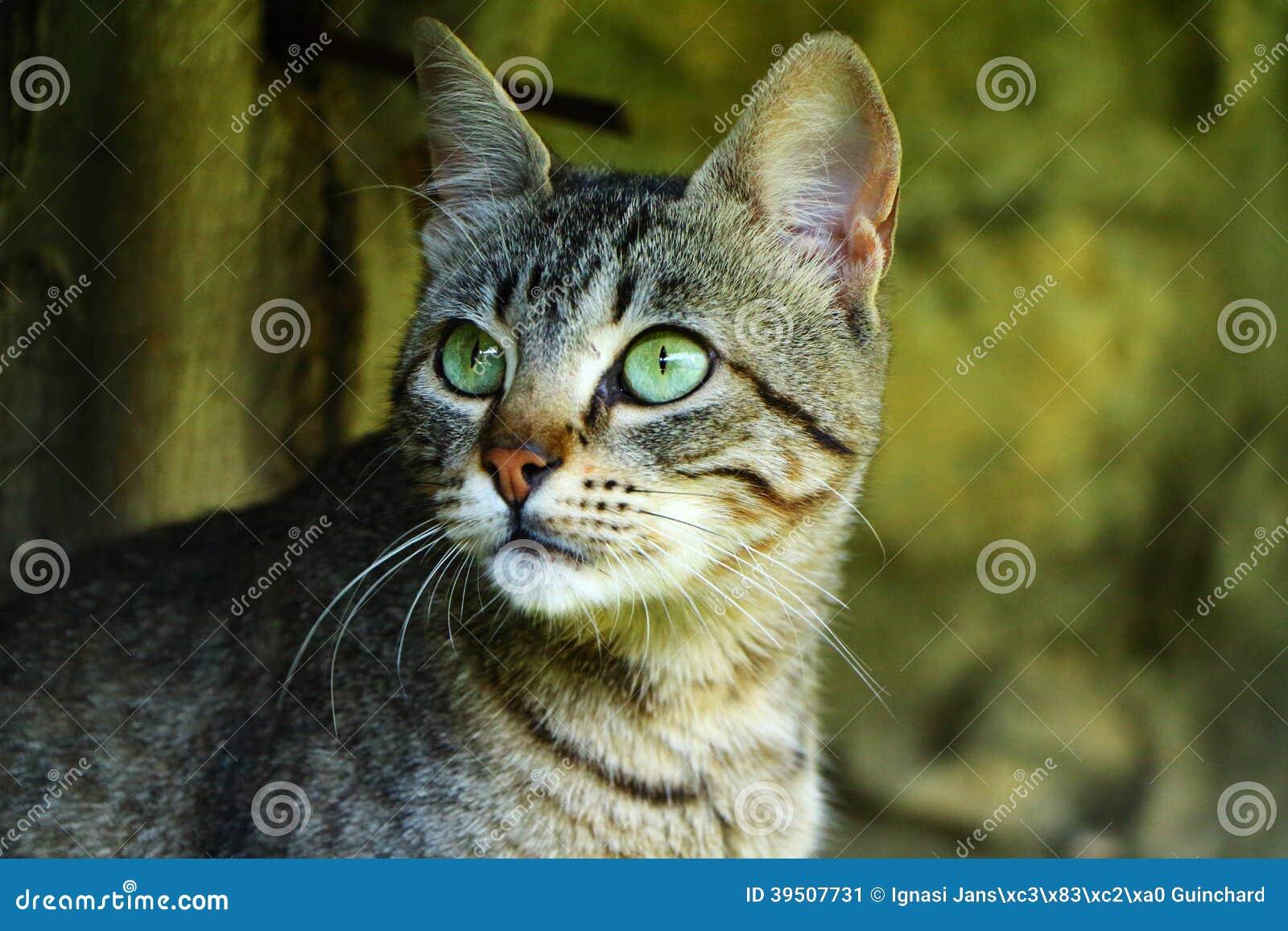 Cats Gazing