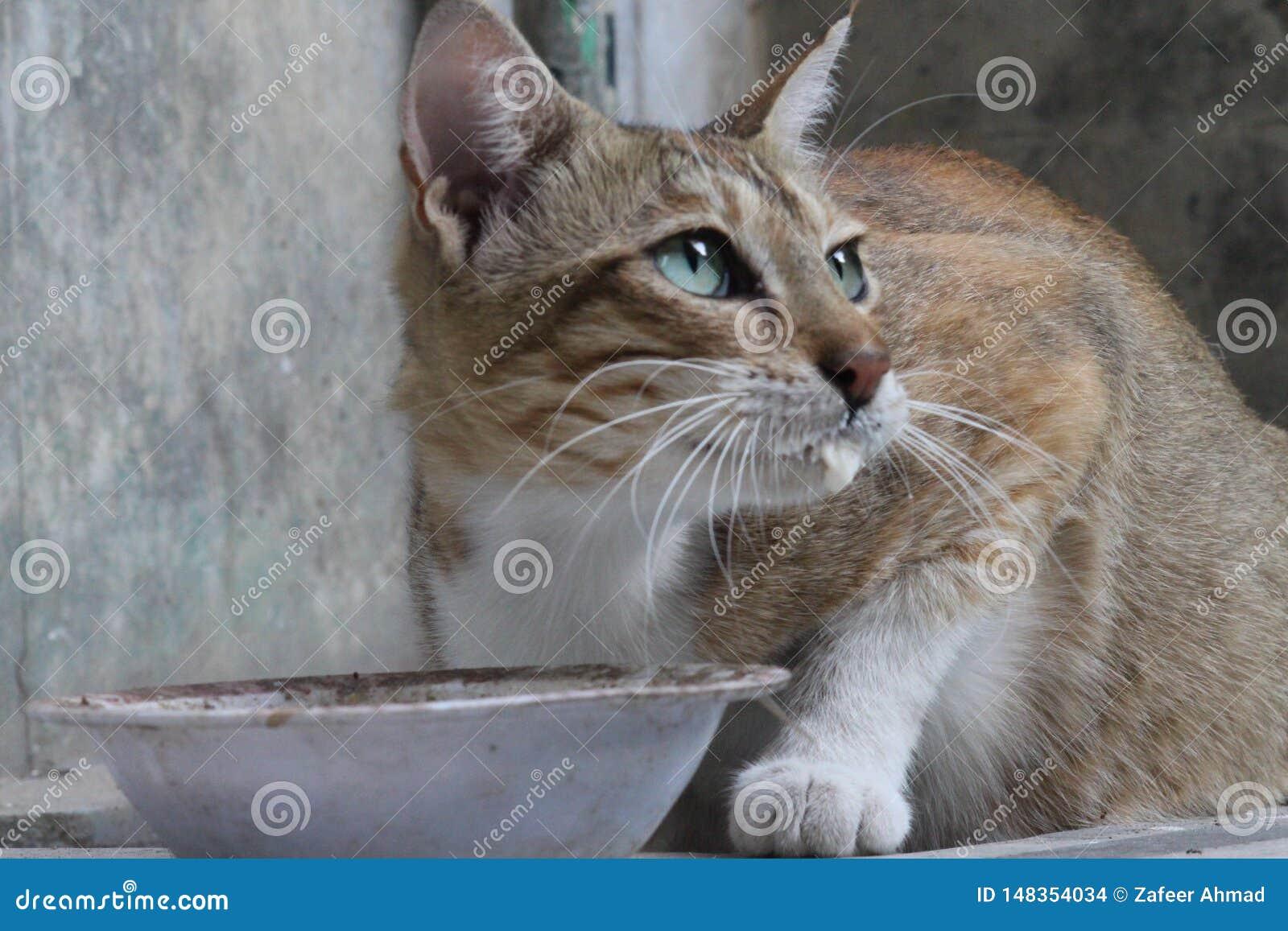 Gderliwy i ?liczny kot