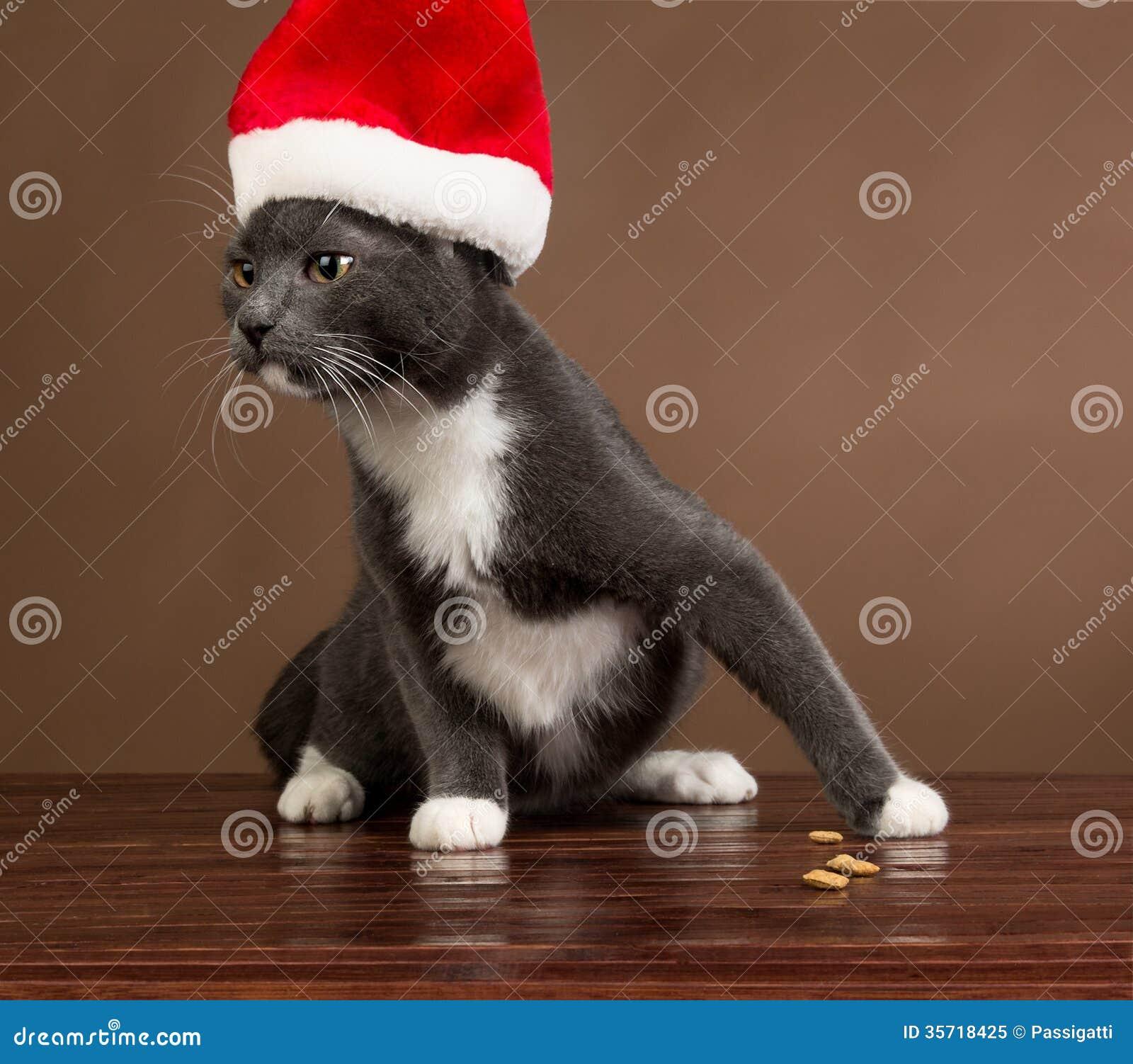 Gderliwy Santa kot