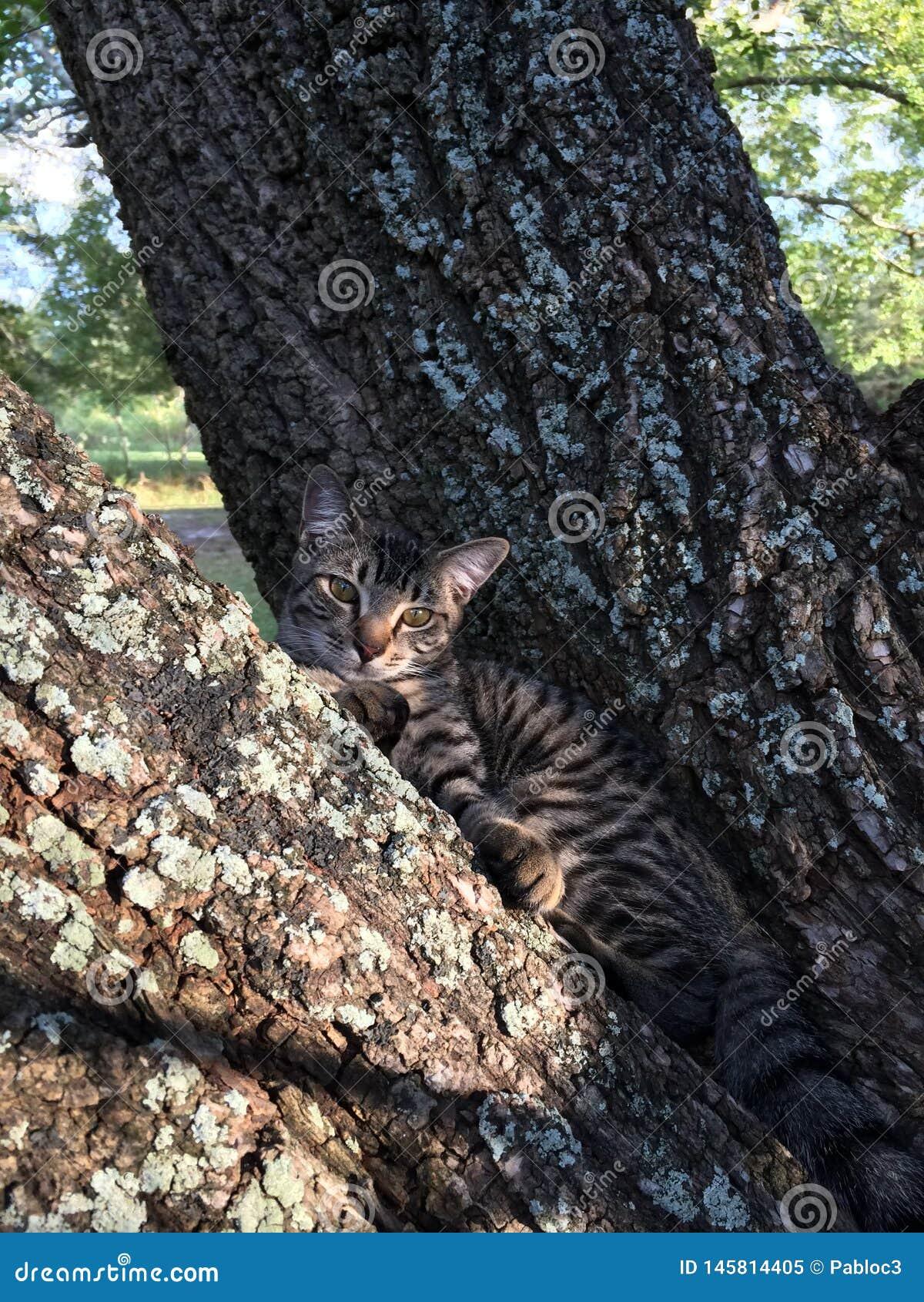 Gdzie jest kot? Ty widziisz on?