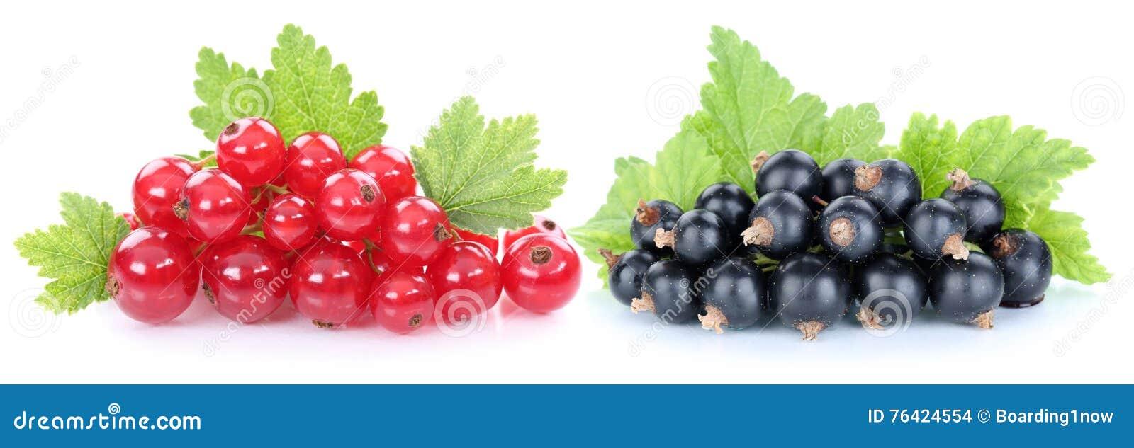 Geïsoleerd de bessenfruit van rode en zwarte besbessen