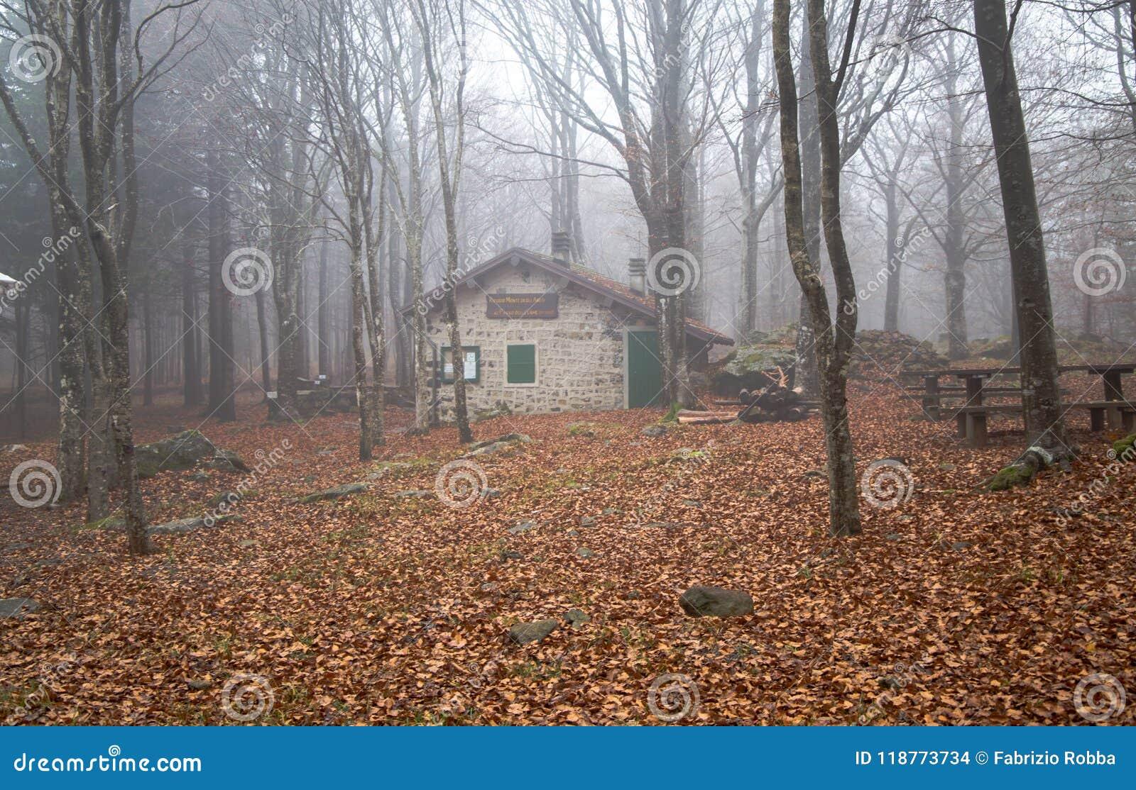 Geïsoleerd huis in het beukenbos