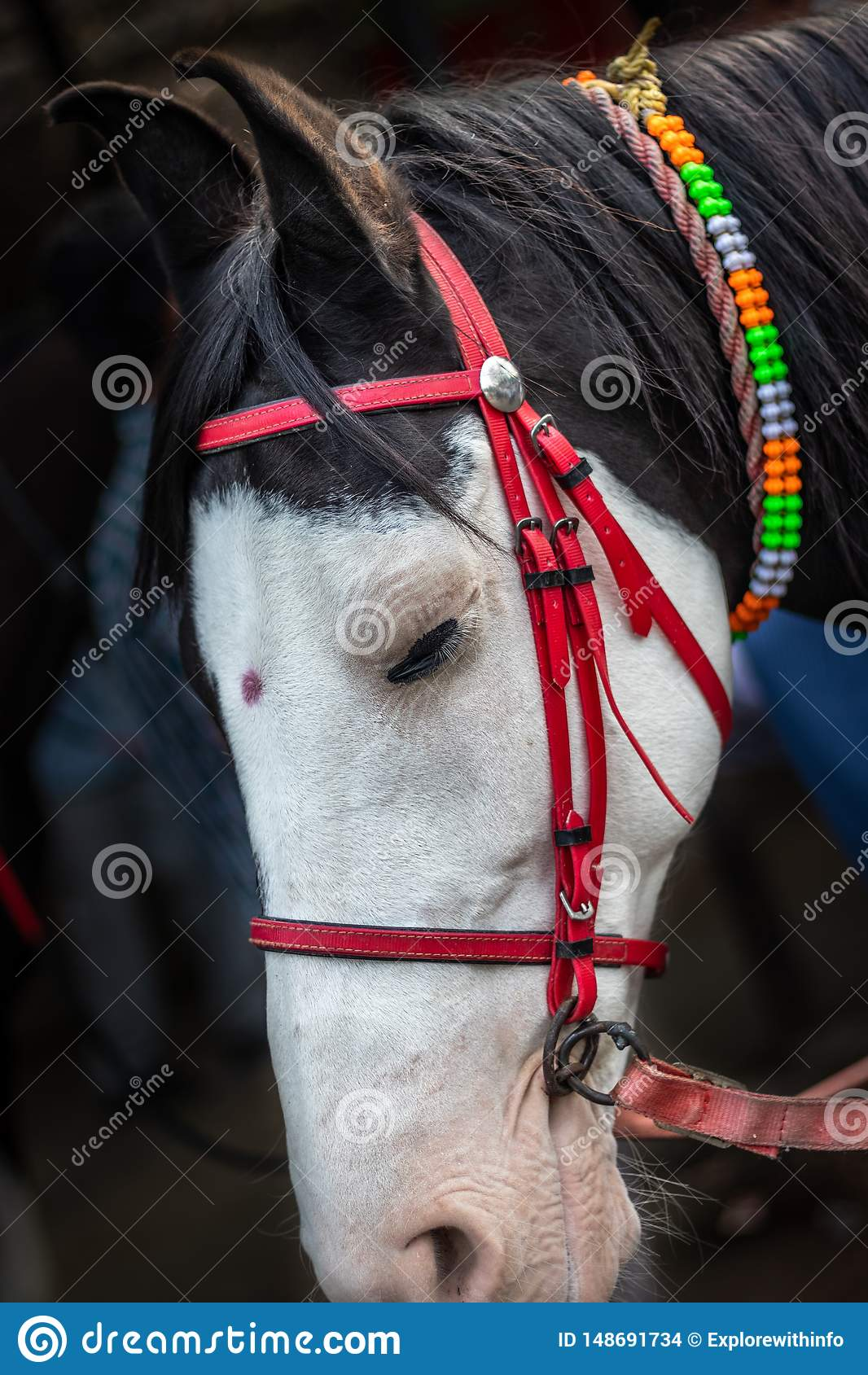 Ge?soleerd Paardhoofd met rode verbindende draad