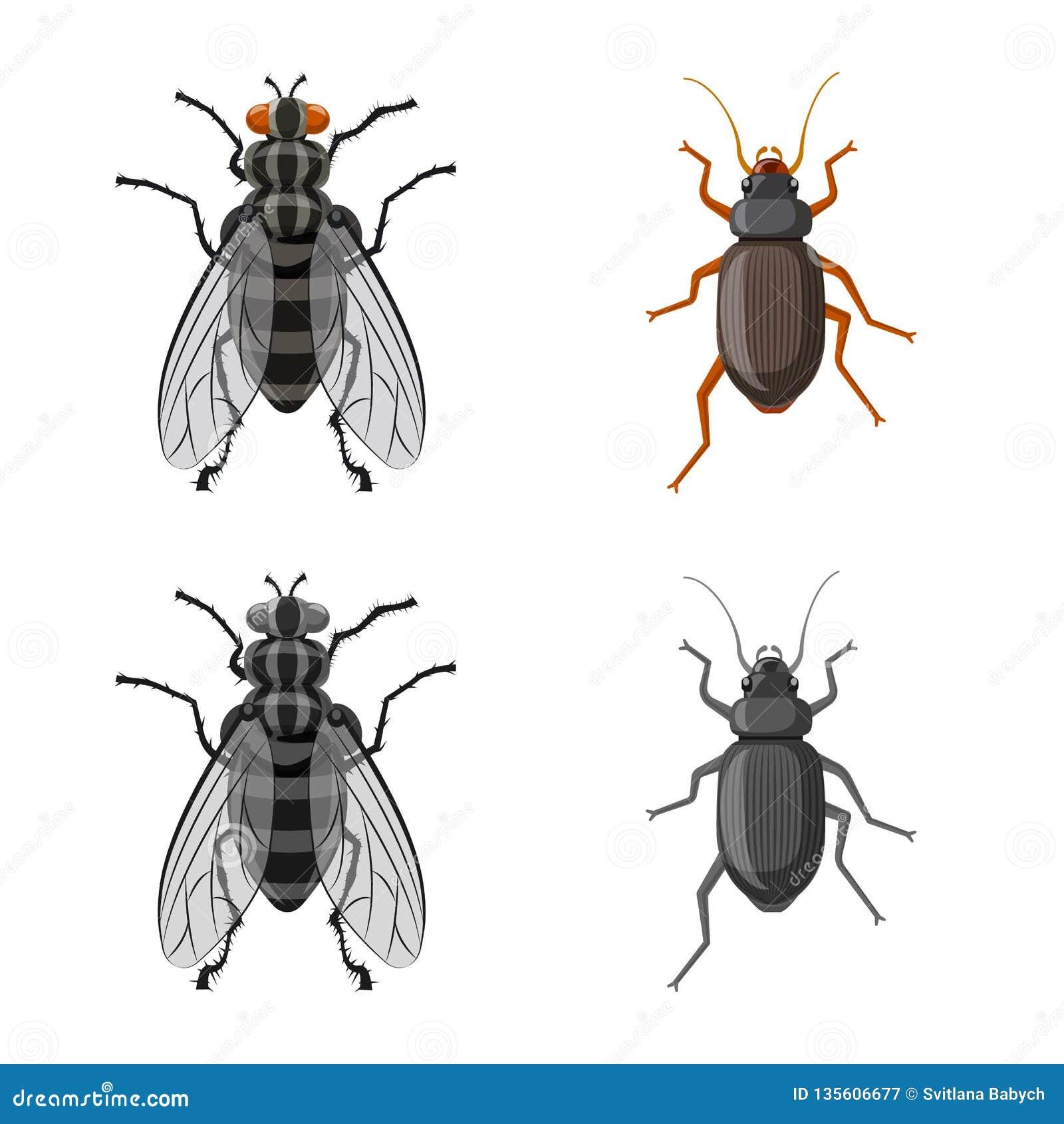 Geïsoleerd voorwerp van insect en vliegteken Reeks van insect en elementen vectorpictogram voor voorraad