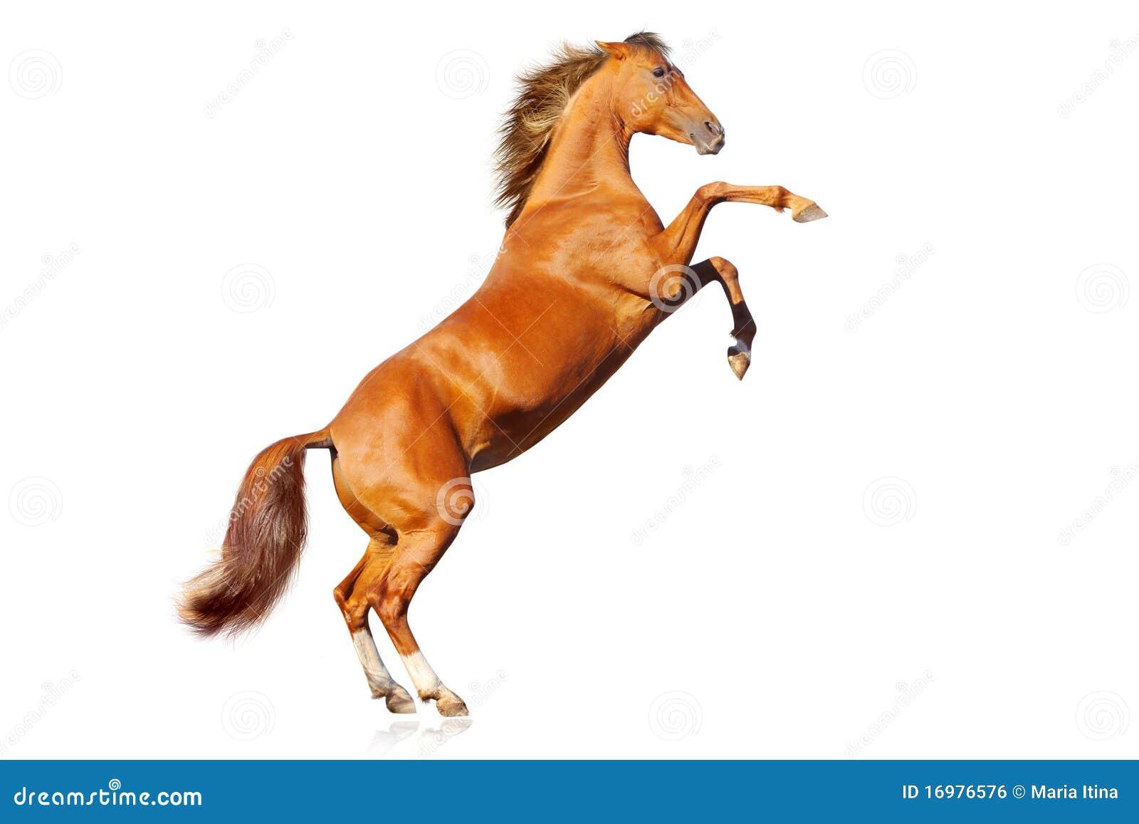 Geïsoleerdd paard