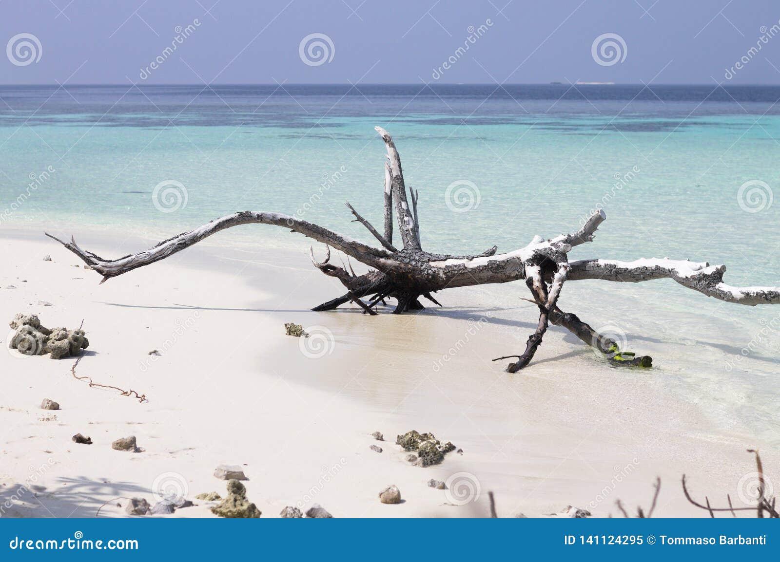 Geïsoleerde boomstam op het strand