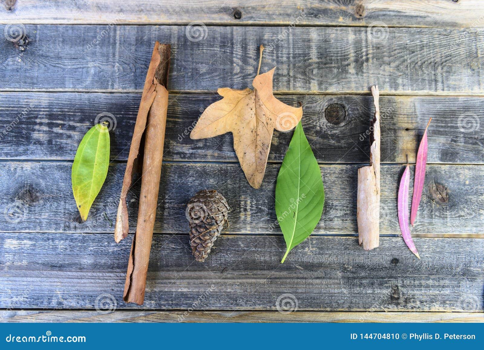 Geïsoleerde die Bladeren en schors op een houten achtergrond worden geschikt