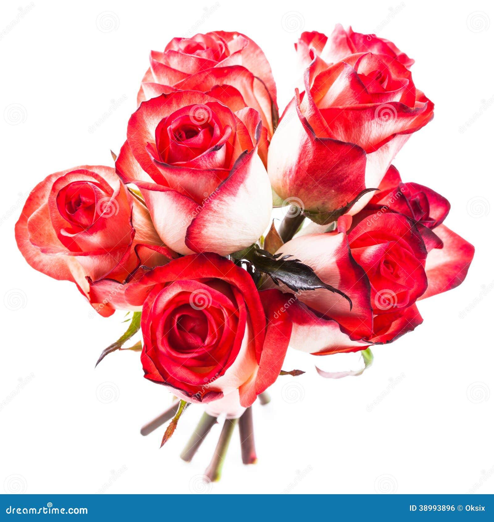 Geïsoleerde rozen