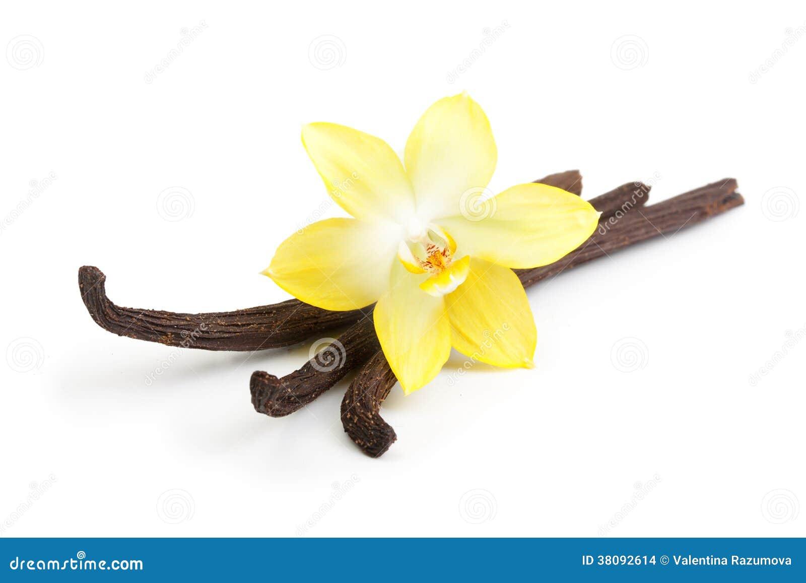 Geïsoleerde vanillepeulen en bloem