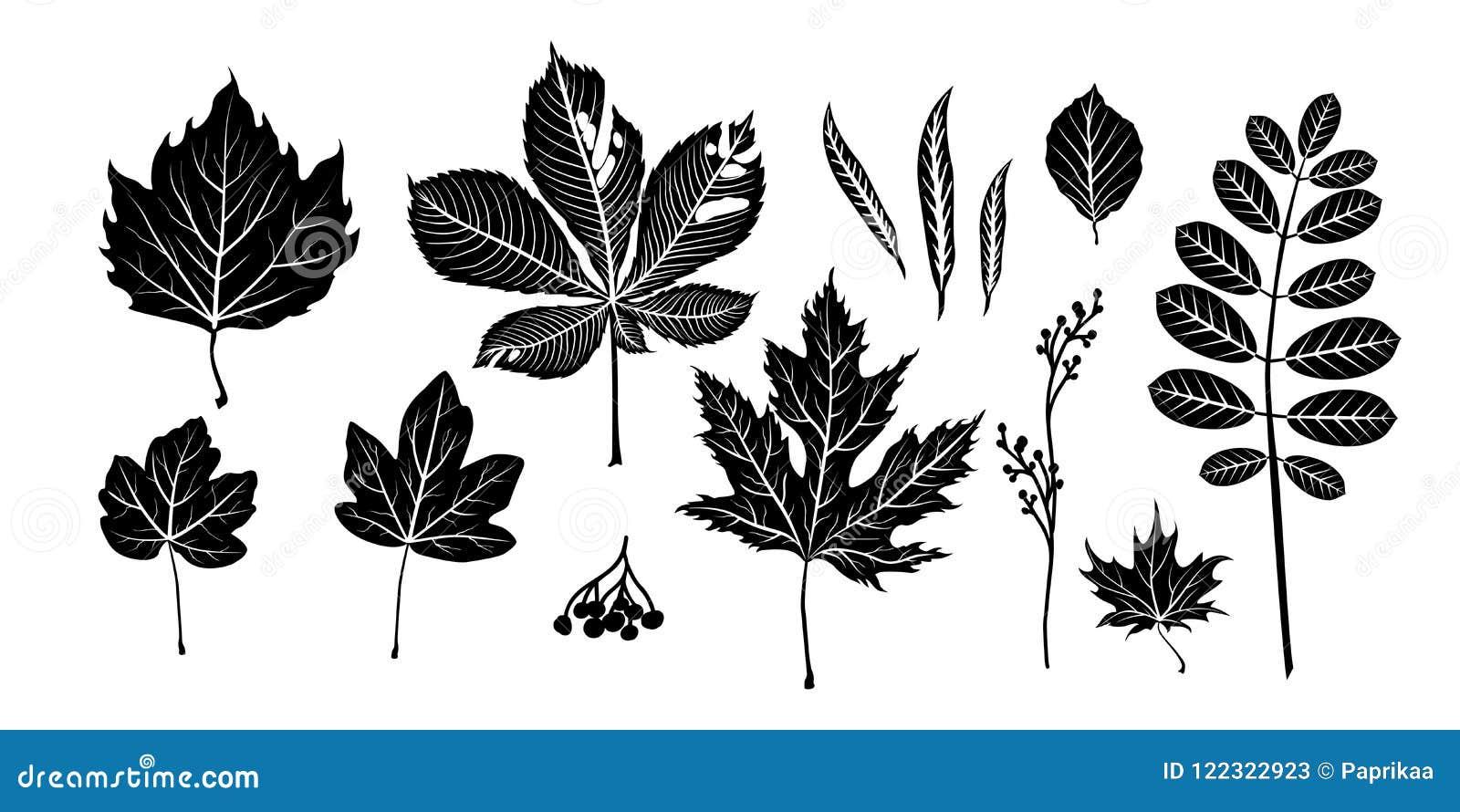 Geïsoleerde zwarte bladeren
