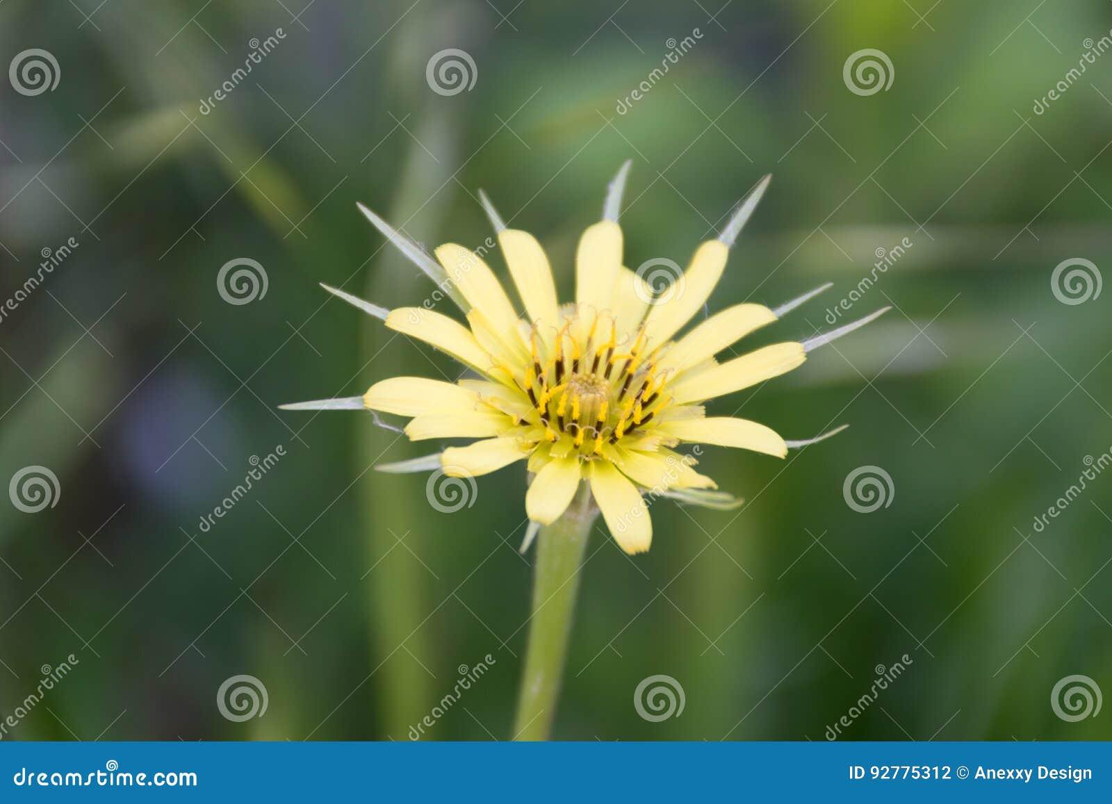 Geöffnete Blume
