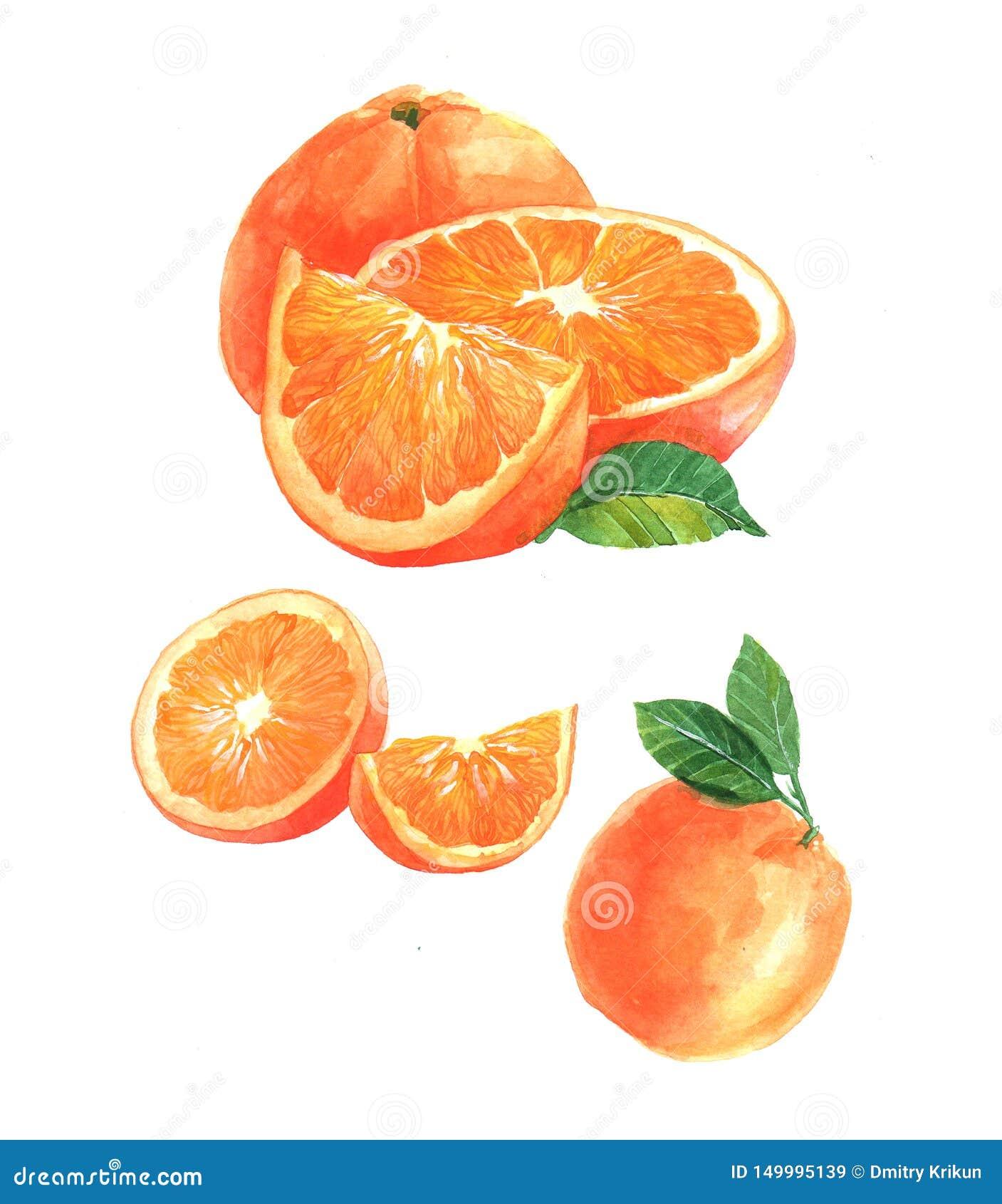 Ge?soleerd waterverf oranje en gesneden oranje fruit