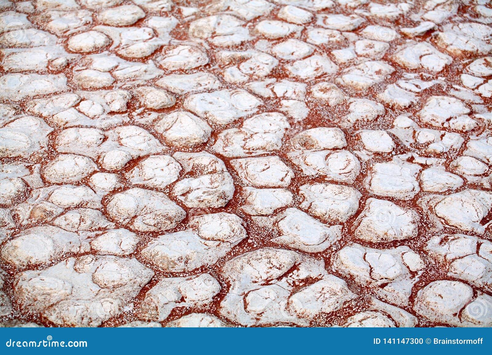 Gebarsten witte droge kleioppervlakte op oranje zandachtergrond in close-up van de de woestijn hoogste mening van Etosha de zoute
