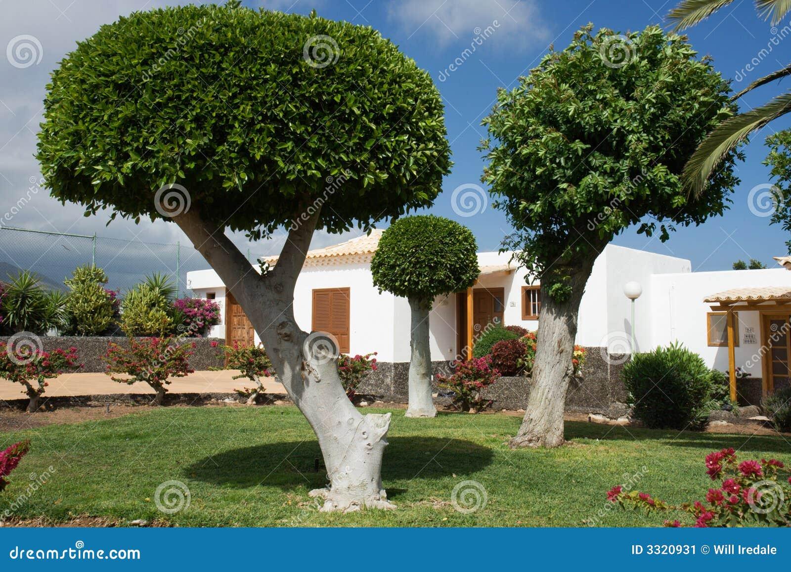Bomen In Tuin : Gebeeldhouwde bomen in een tuin stock afbeelding afbeelding