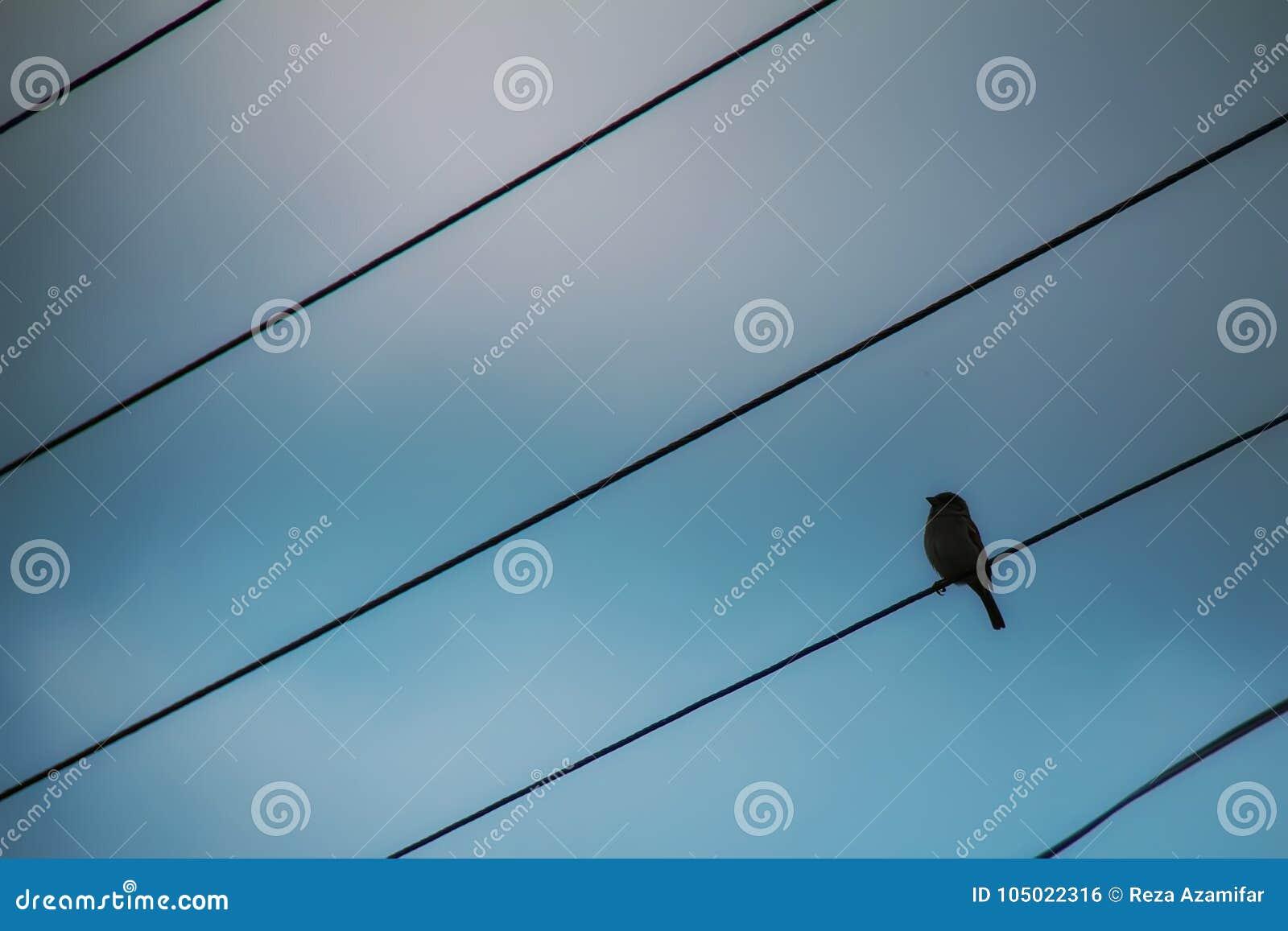 Geben Sie Wie Ein Vogel Frei Stockfoto - Bild von rahmen, tiefstand ...