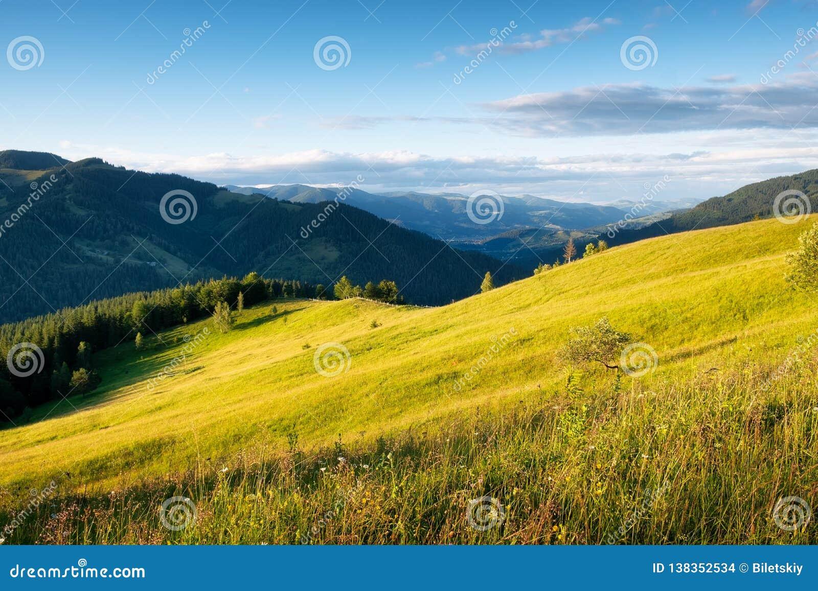 Gebied in de bergen De zomerbos in bergen Natuurlijk de zomerlandschap Weide met bloemen in bergen Landelijk landschap