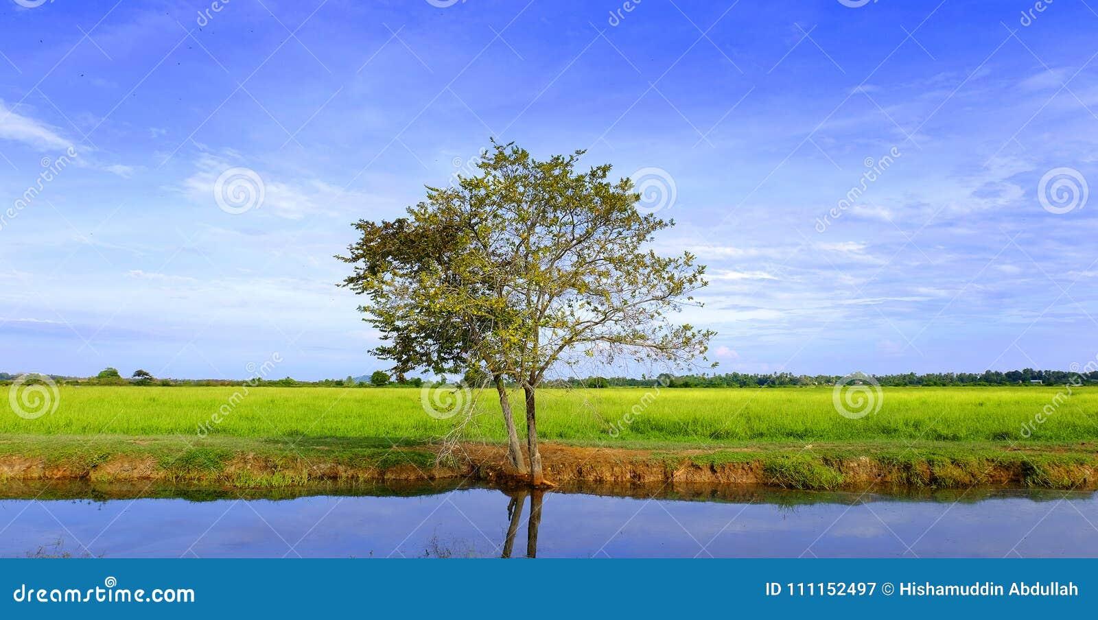 Gebied met de blauwe hemel