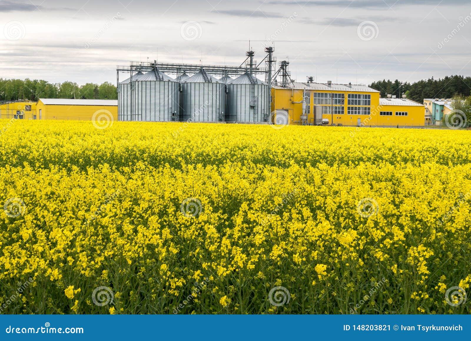 Gebied van bloem van raapzaad, canolakoolzaad in Brassica napus bij agro-verwerkt installatie voor verwerking en zilveren silo s