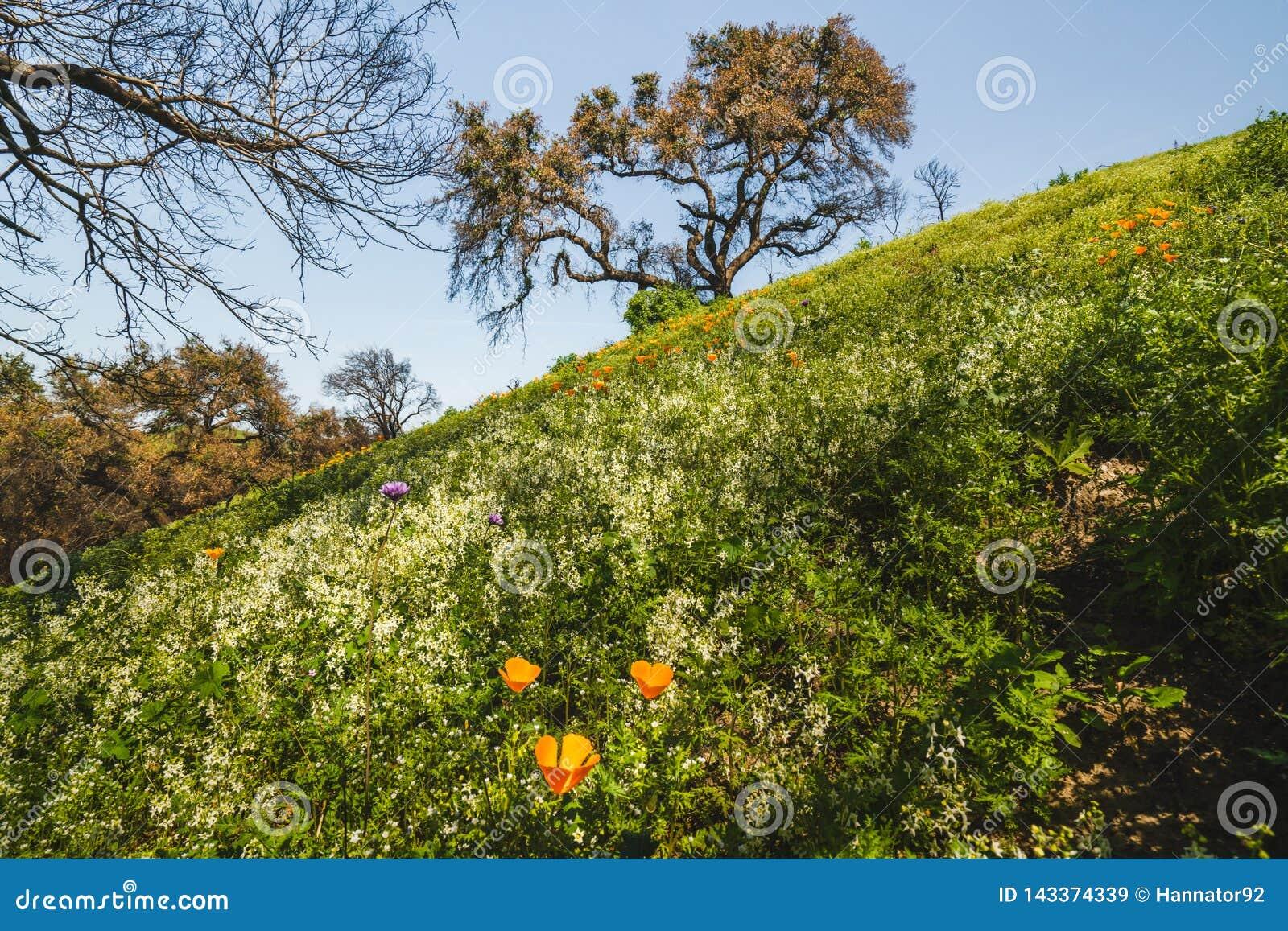 Gebied van bloemen en eiken boom