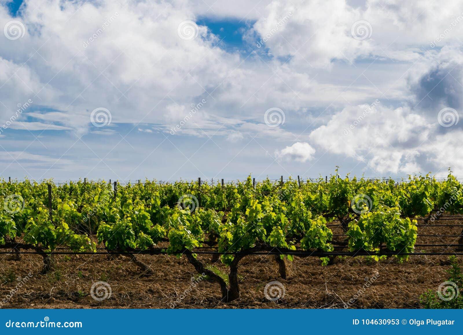 Download Gebied Van De Wijnstokken Vroege Lente In Catalonië Stock Afbeelding - Afbeelding bestaande uit platteland, hemel: 104630953