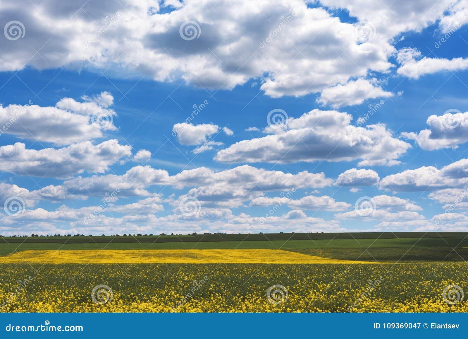 Gebied van helder geel raapzaad in de lente Raapzaadbrassica de verkrachting van het napus oliehoudende zaad