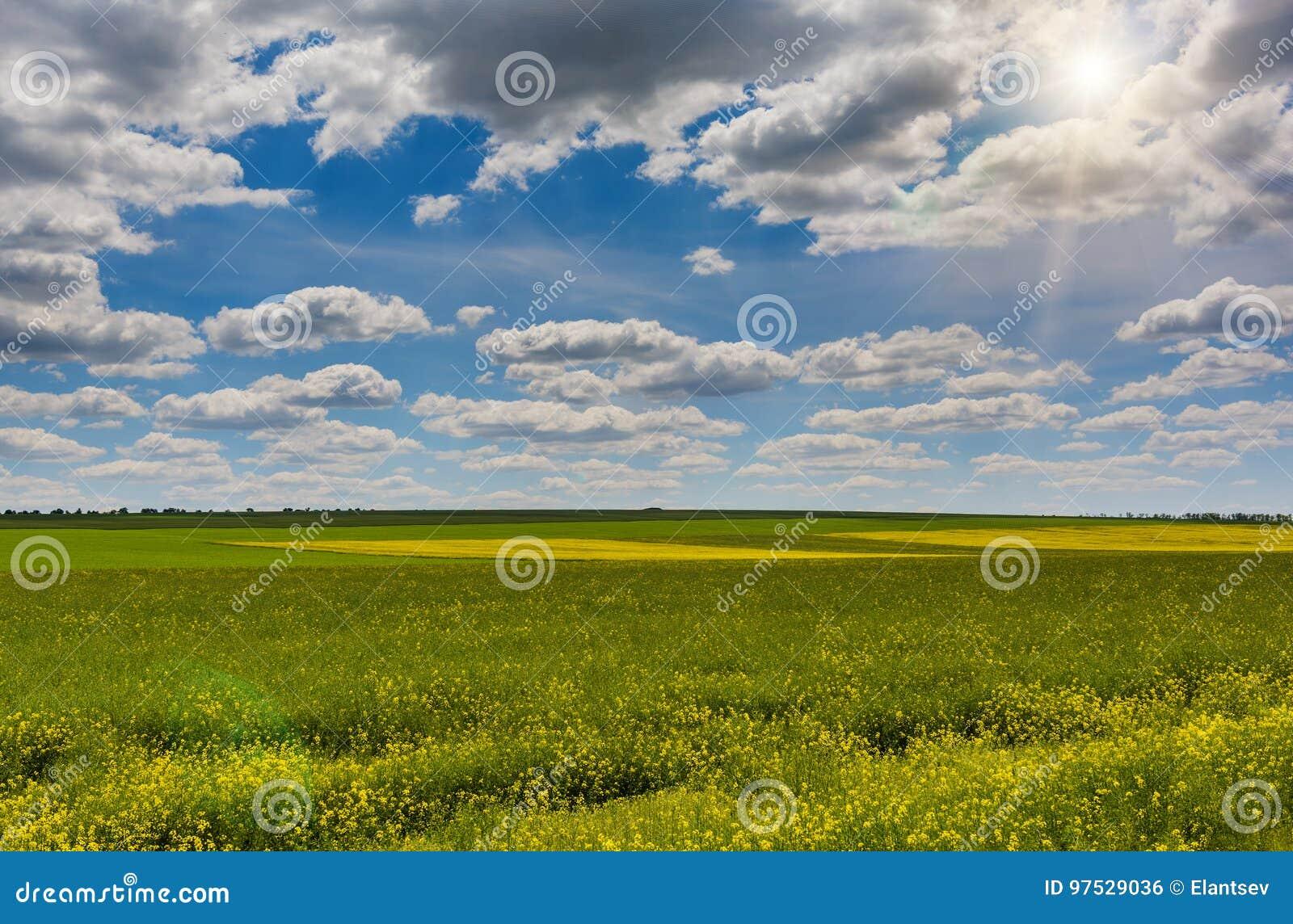 Gebied van helder geel raapzaad in de lente De verkrachting van het raapzaad oliehoudende zaad
