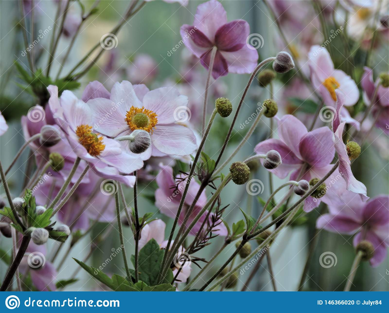 Gebied van mooie violette bloemen in de zomerpark in Helsinki, Finland