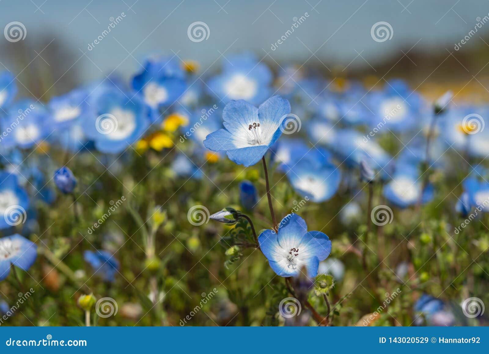 Gebied van wilde bloemen