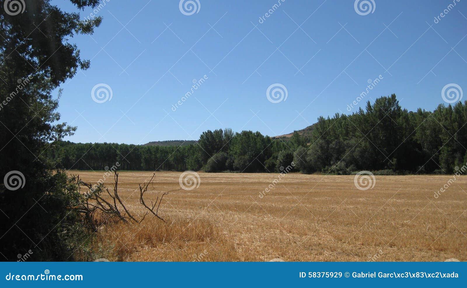 Gebieden en landschappen