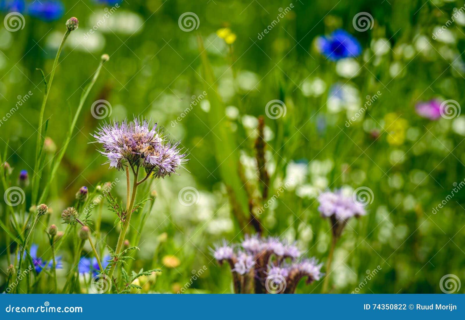 Gebiedsrand om het behoud van biodiversiteit te steunen