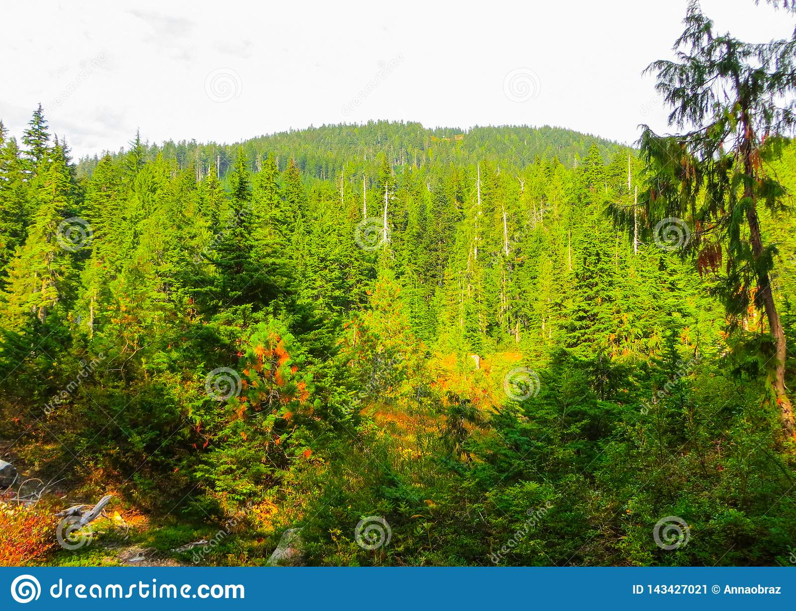 Gebirgsfl?sse in den W?ldern nahe Vancouver September 2014 Britisch-Columbia, Kanada