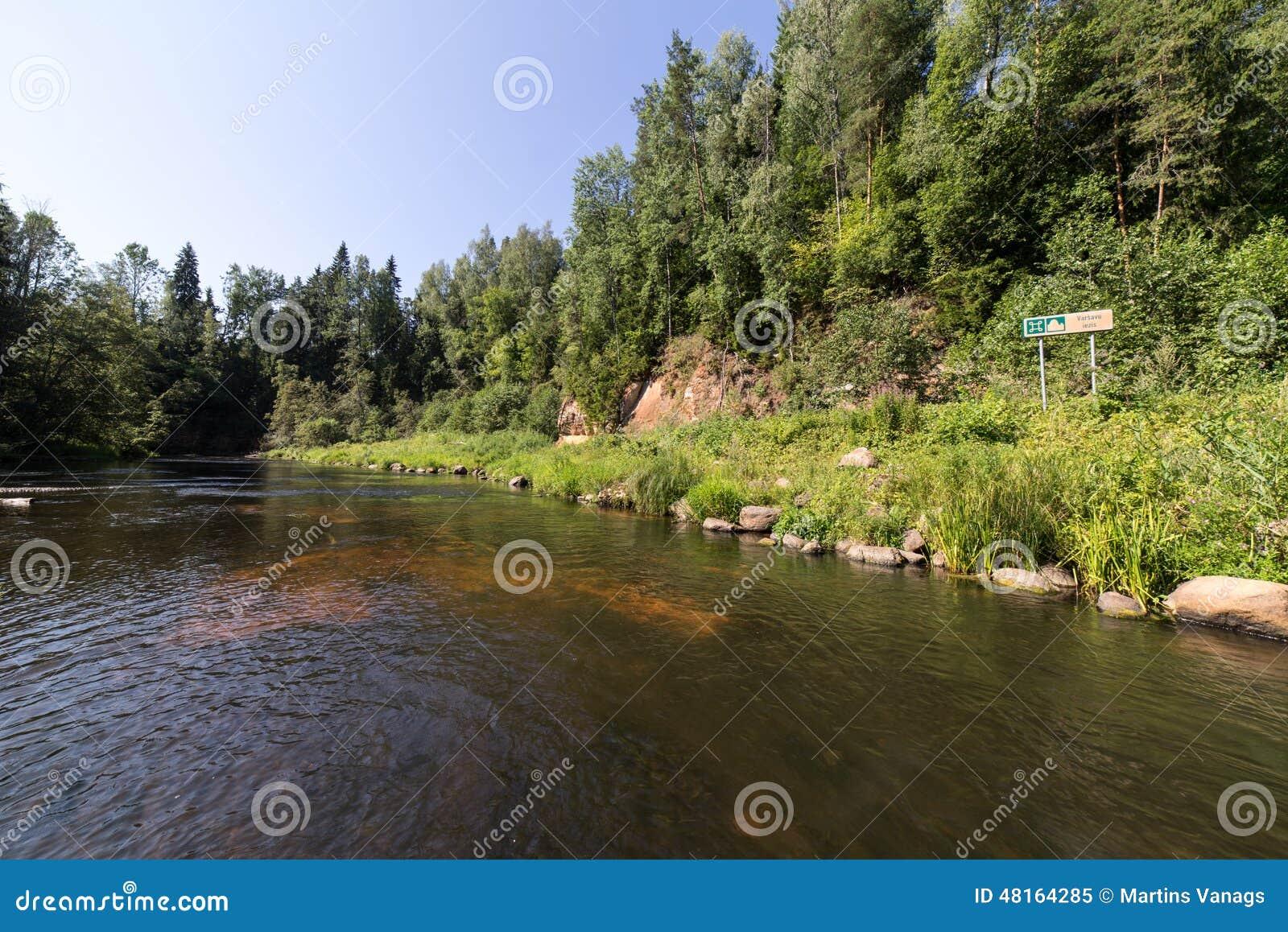 Gebirgsfluss im Sommer umgeben durch Wald