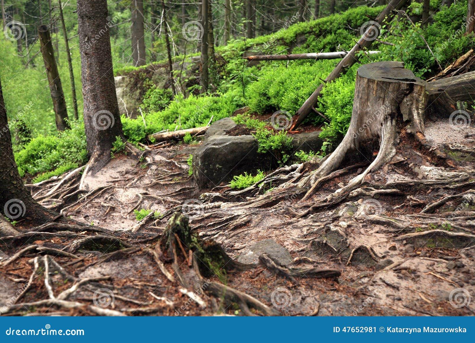 Fußboden Aus Polen ~ Gebirgspfad in den tafelbergen polen stockbild bild von grün
