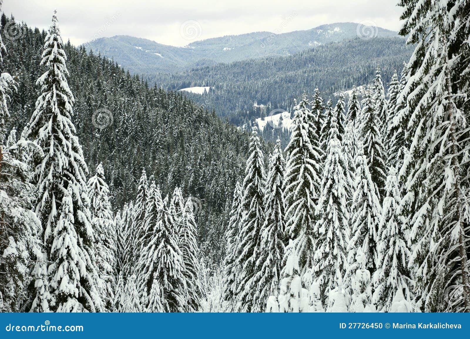 Gebirgswinterwald