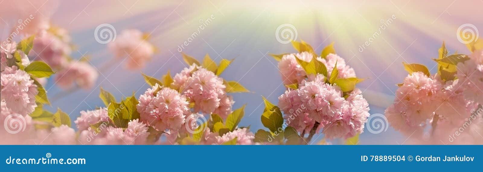 Gebloeid & x28; flowering& x29; mooie Japanse vrolijke tak