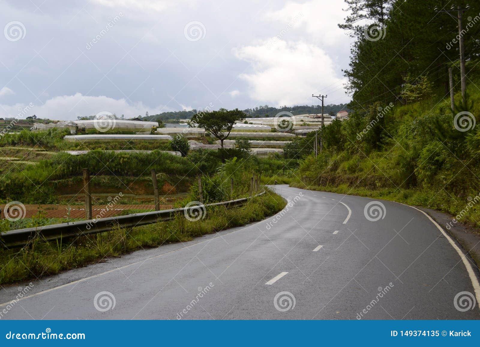 Gebogen asfaltweg langs groene bos en landbouwlandbouwbedrijven met serres