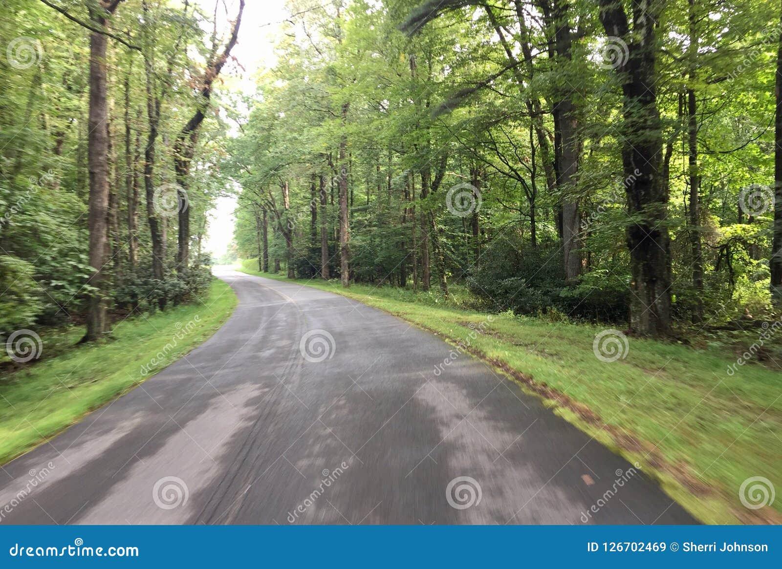 Gebogen weg die in het bos gaan