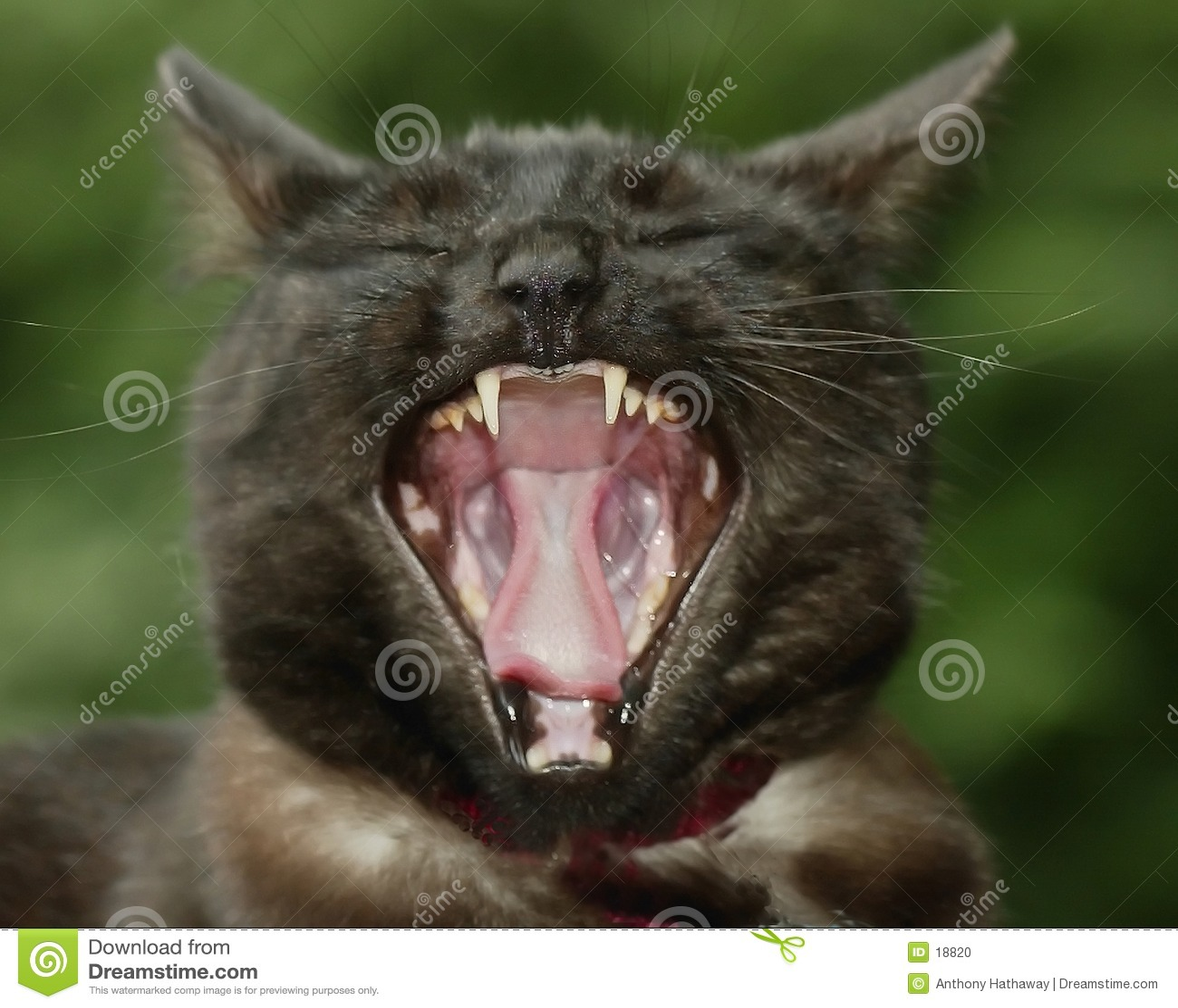 Gebohrte Katze