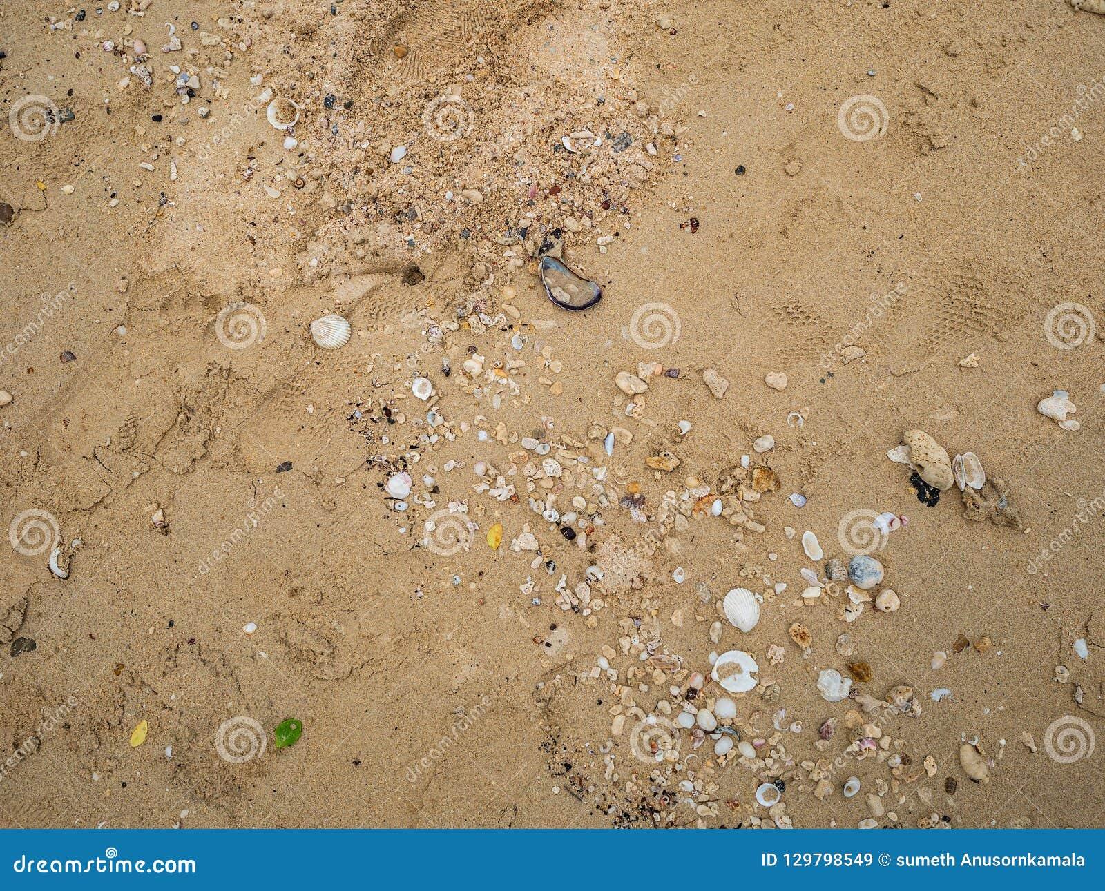 Gebroken shell op het zand