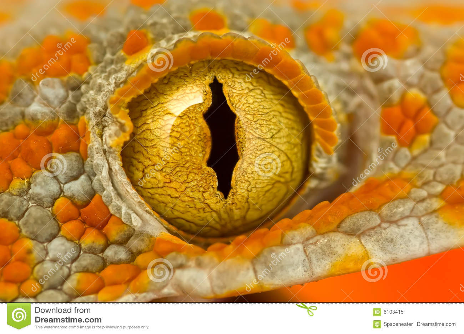 Gecko ματιών tokay